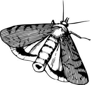 Motten in der Küche - Strichzeichnung