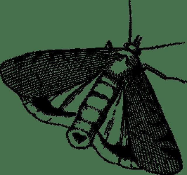 Motten In Der Kuche Woher Sie Kommen Und Wie Man Sie Vertreibt